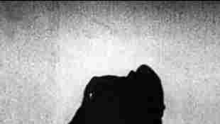 The Best Classical Horror Movies Nosferatu