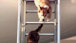 Queen Elizabeth's Dogs