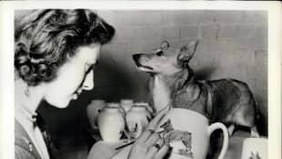 Queen Elizabeth's New Puppy Passed Away