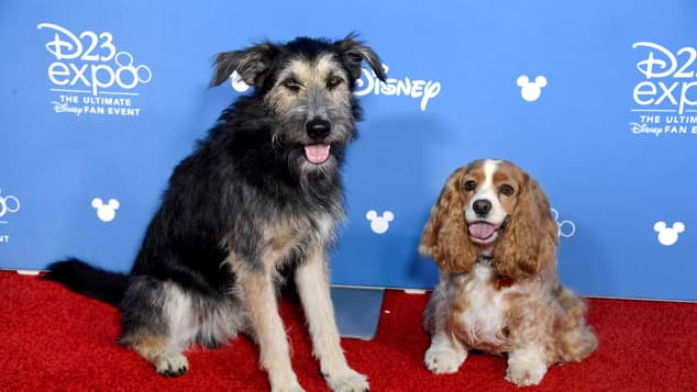The stars of the 'Lady at the Tramp' Reboot