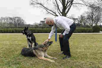 Joe Biden Announce The Death Of Presidential Pet Dog Champ German Shepherd tribute news photos pictures