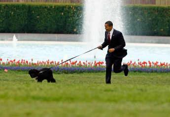 Barack Obama Confirms Pet Dog Bo Has Died Age 12 Portuguese Water Dog presidential pet 2021 biden trump