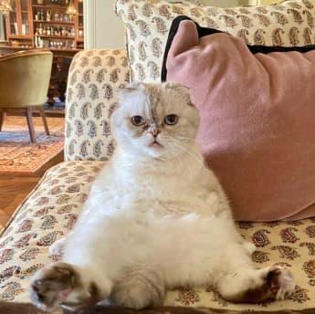 'Olivia Benson' la gatita de Taylor Swift